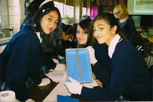 Seventh graders dissect earthworms in the Science Lab.