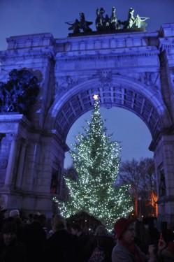 tree-at-night