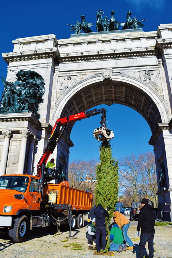Members of DeSales Media and Precision Construction Co. put in place the Christmas Tree at Brooklyn's Grand Army Plaza. It will be dedicated and blessed by Bishop DiMarzio on Dec. 20. Photo © Antonina Zielinska